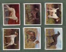 Tobacco cards set cigarette cards Dogs 1915